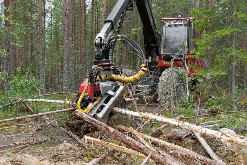 Máquina da ceifeira que trabalha em uma floresta, desbastando pinheiros novos fotos de stock royalty free