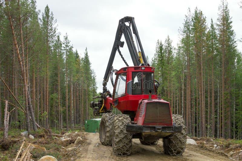Máquina da ceifeira que trabalha em uma floresta, Indústria de madeira foto de stock