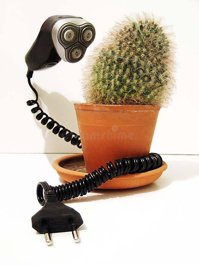 Máquina de afeitar eléctrica y cactus Broma, diversión, humor foto de archivo libre de regalías