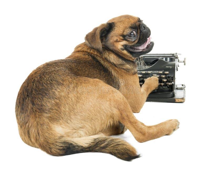 Máquina de escrever do cão fotos de stock