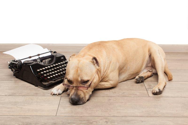 Máquina de escrever e cão nos vidros fotos de stock royalty free