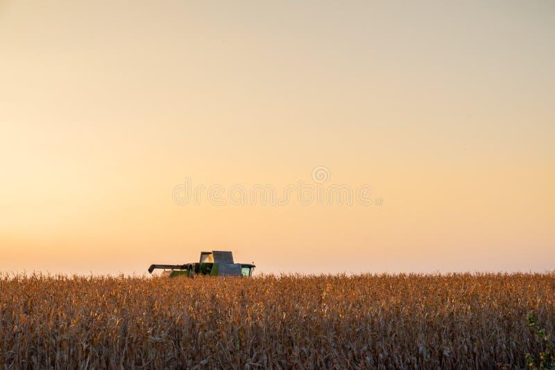 Máquina de la máquina segadora en campo de maíz en la puesta del sol Propósito multi fotos de archivo libres de regalías