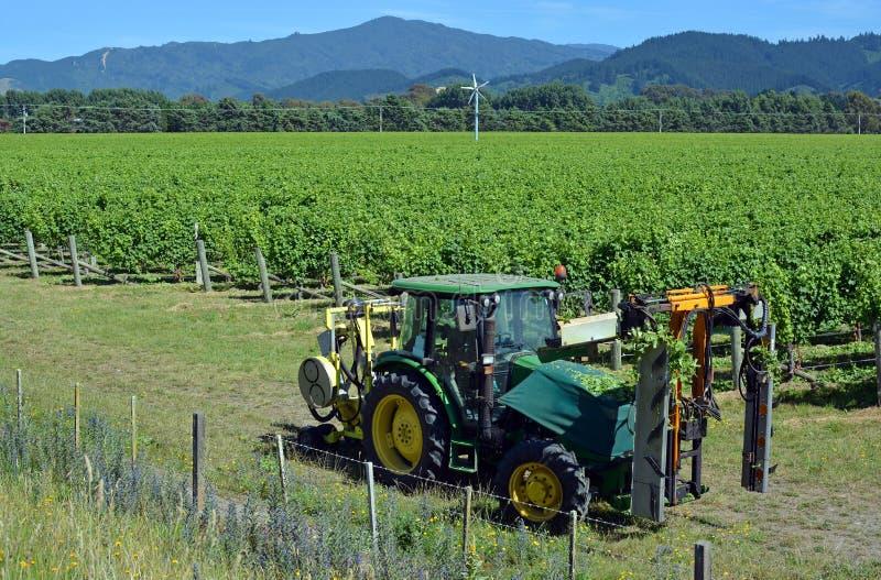 Máquina del retiro de la hoja en el viñedo de Marlborough Sauvignon Blanc imagen de archivo