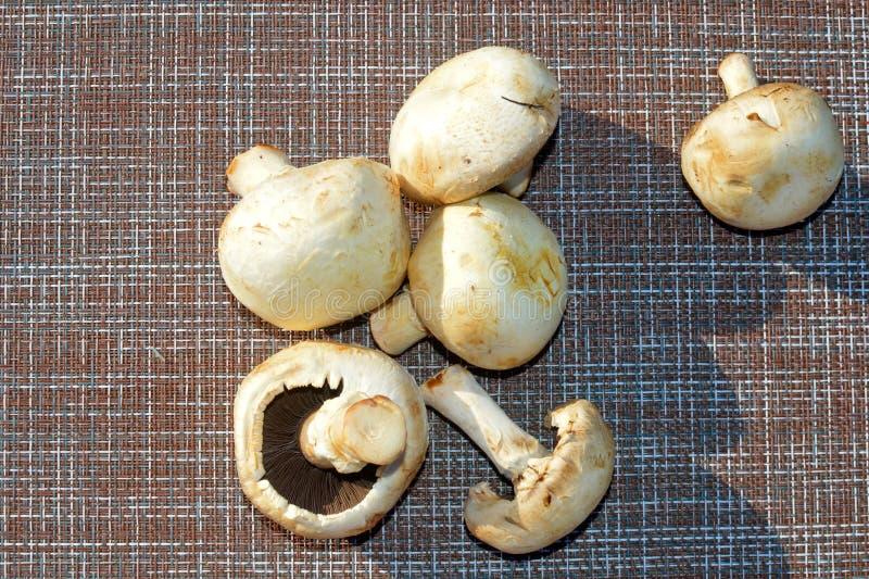 A máquina desbastadora do cogumelo recolhe cogumelos imagens de stock royalty free