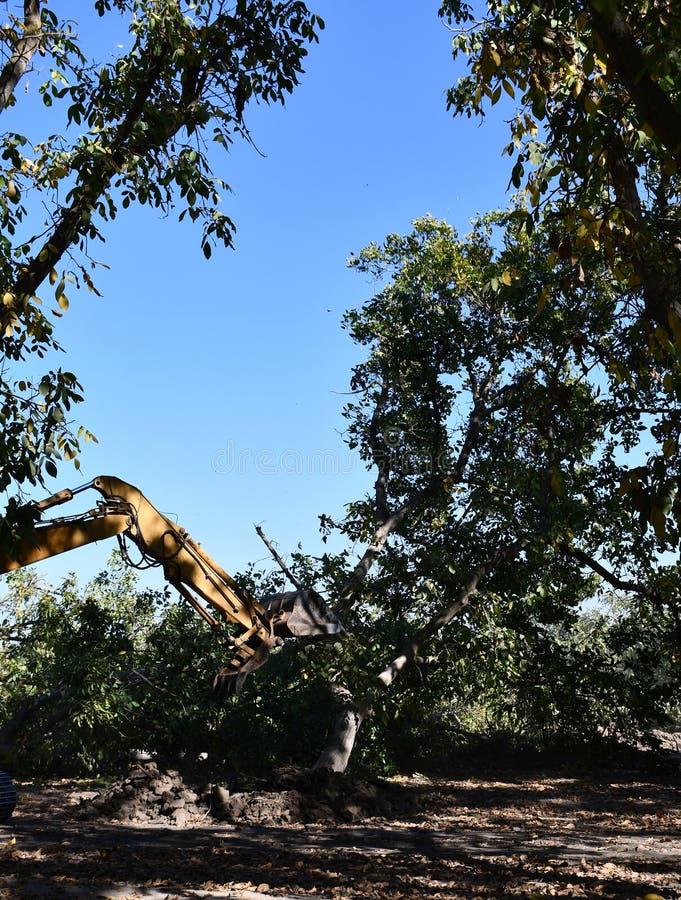 A máquina escavadora usada para escavar acima árvore-cotoes e raizes após a floresta foi removida fotos de stock royalty free