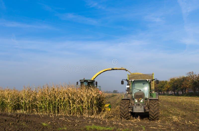 Máquina segador de maíz en la cosecha del maíz para el sector agrícola fotos de archivo libres de regalías