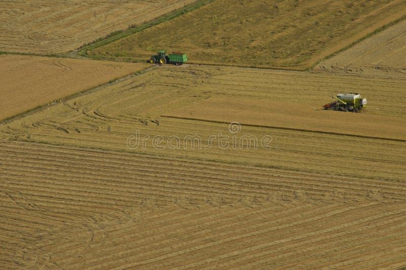 Máquina segador y tractor que cosechan campos del arroz imagen de archivo