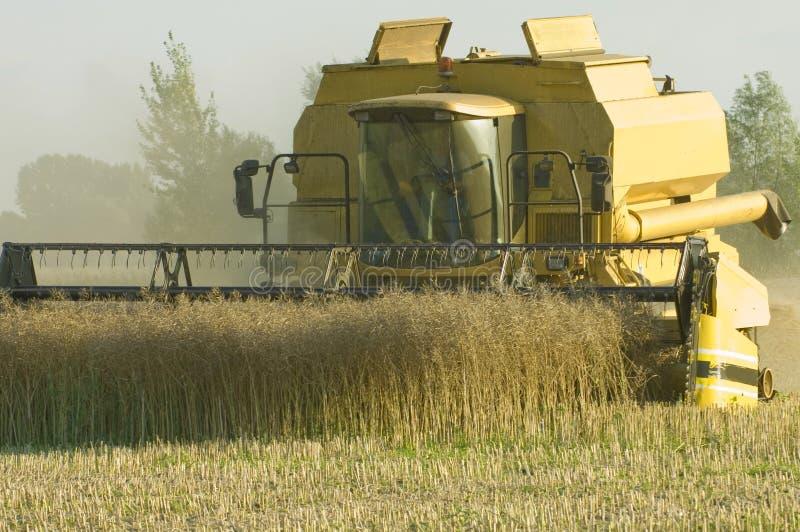 Máquina segadora en la ganancia del maíz