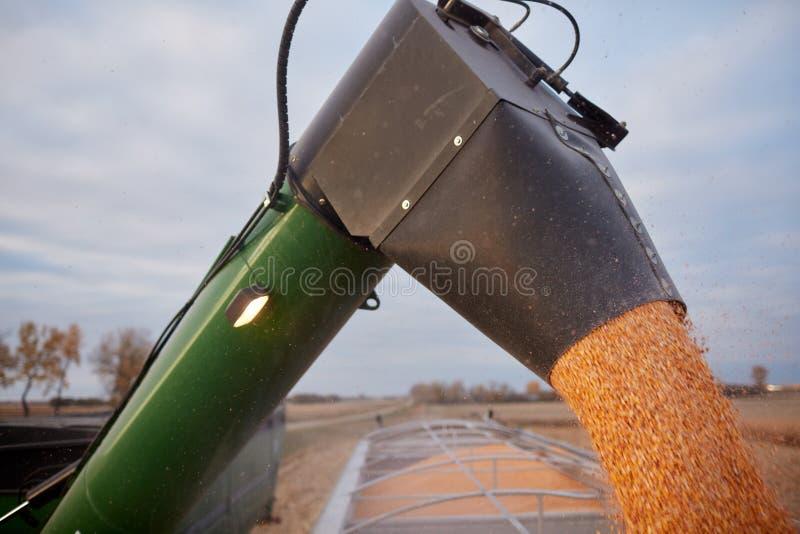 Máquina segadora que llena un camión de la granja imagenes de archivo