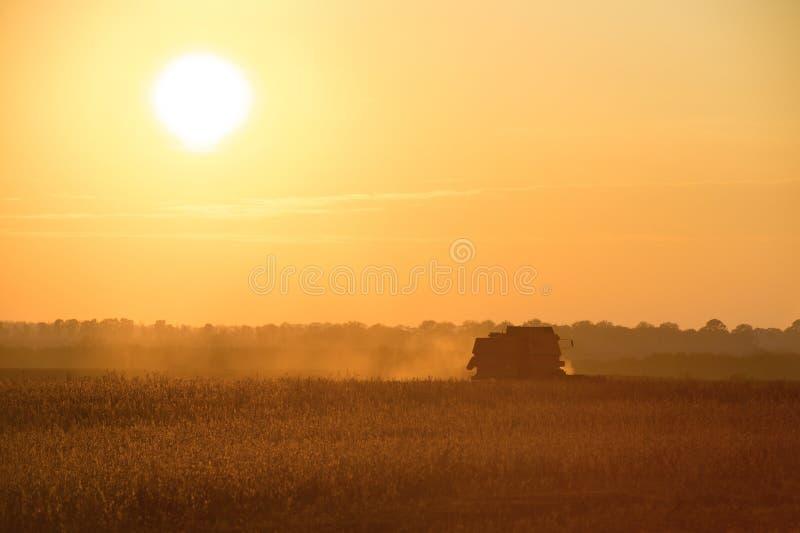 Máquina segadora que trabaja un campo de la soja en la puesta del sol del verano imagen de archivo libre de regalías