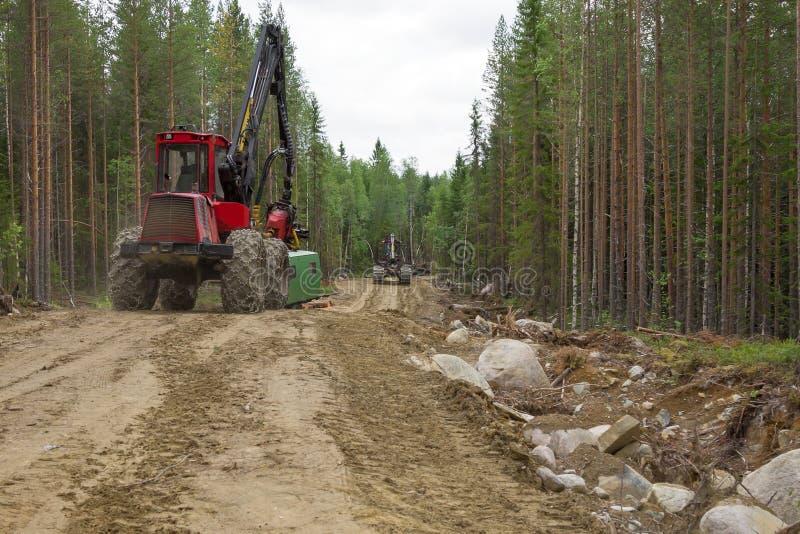 Máquinas da ceifeira que trabalham em um thrue móvel da floresta a trilha da floresta Indústria de madeira imagem de stock