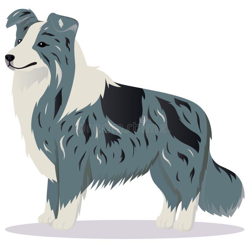 Mármore do cão de border collie ilustração stock