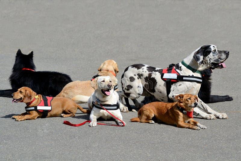 Más reclinación del perro de la terapia foto de archivo