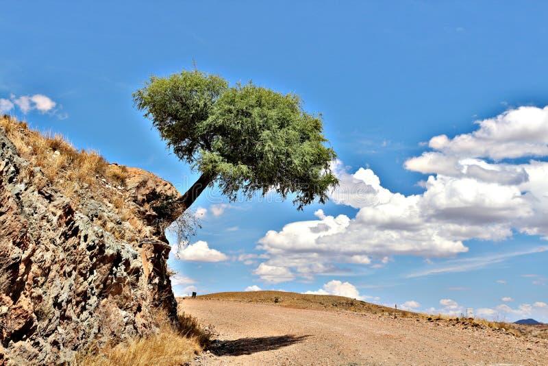 Máscara da árvore fotografia de stock royalty free