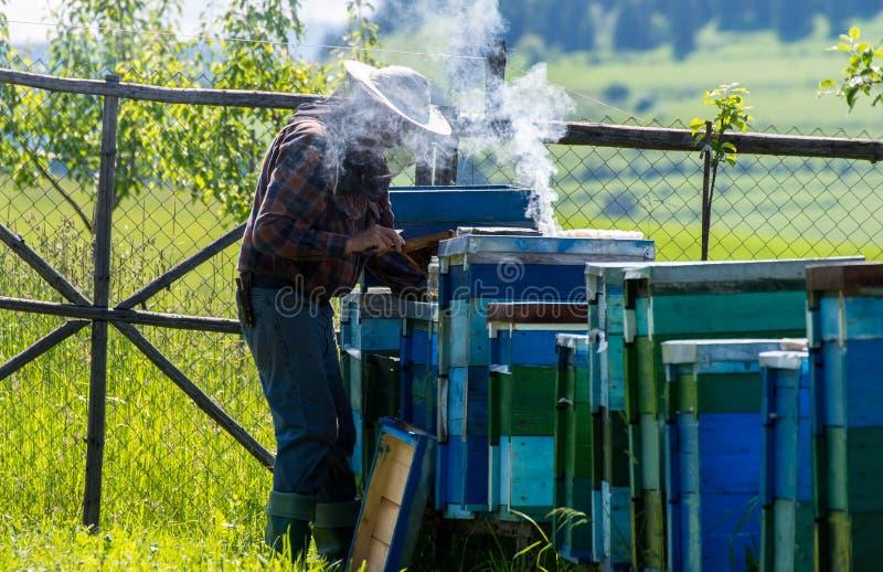 M?scara que lleva del beekeper inidentificable, usando el fumador, trabajando con las abejas foto de archivo libre de regalías