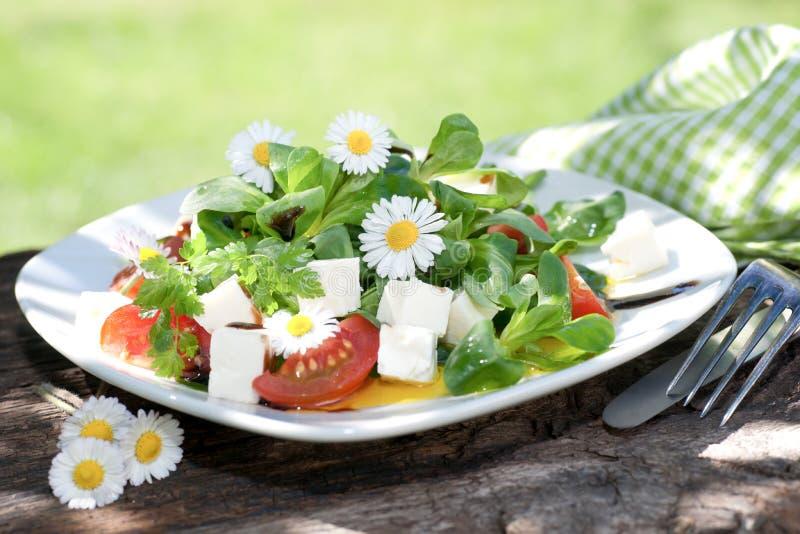 Mâche avec du fromage photographie stock libre de droits