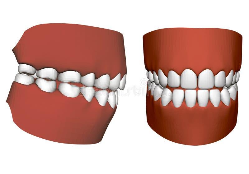 Mâchoire humaine avec des dents illustration de vecteur