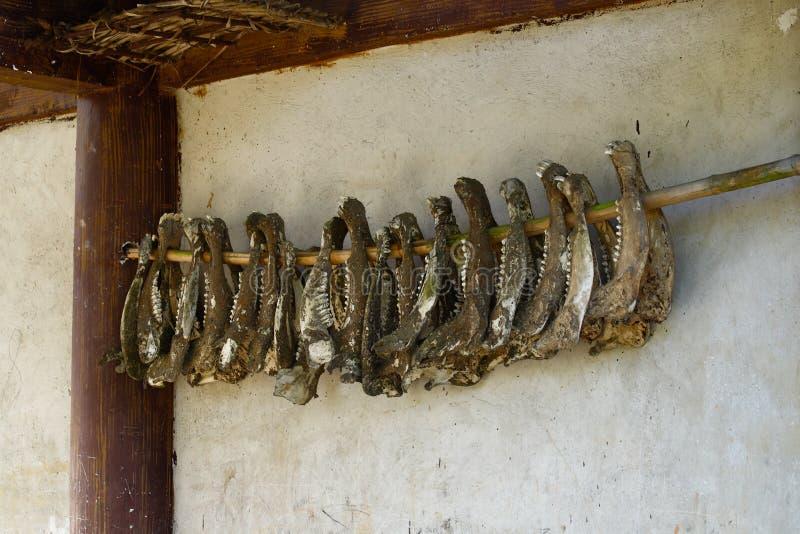 Mâchoires des animaux accrochant dans un village de Yunnan, Chine photographie stock