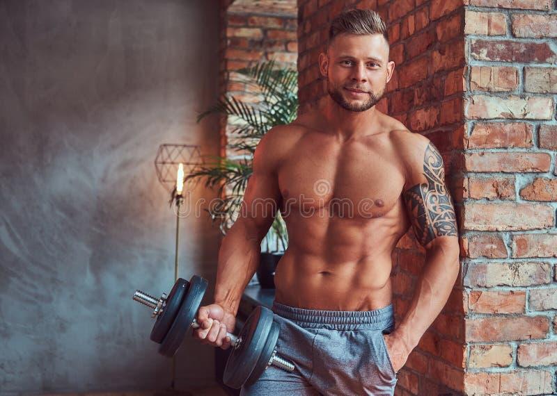 Mâle barbu beau avec les cheveux élégants et tatouage sur son bras, sans chemise en bref, posant avec des haltères, se tenant photo libre de droits
