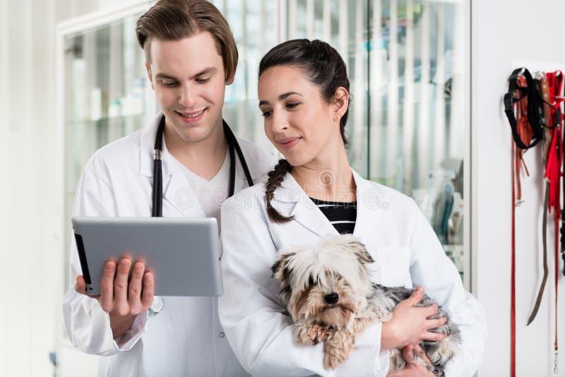 Mâle et vétérinaire féminin à l'aide du comprimé numérique images libres de droits