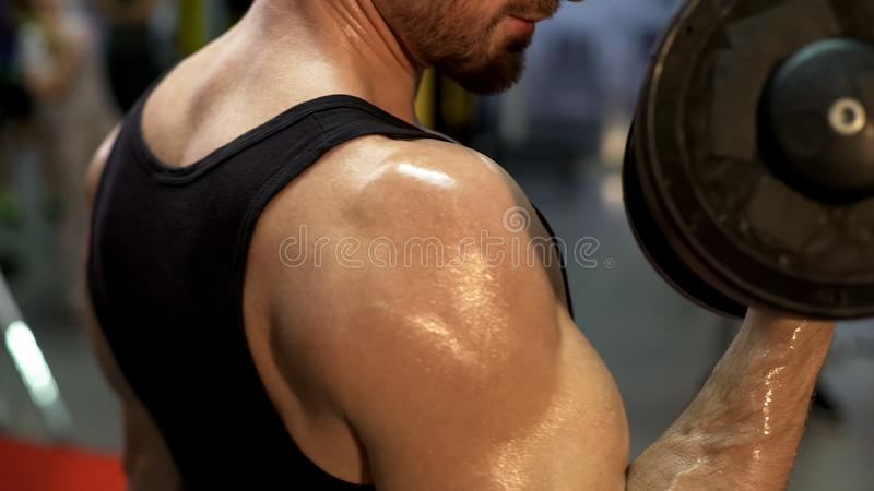 Mâle sûr convenable faisant des ascenseurs avec des haltères de fixe-poids, regardant le biceps photos stock