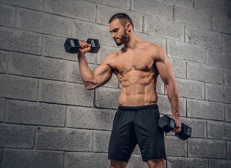 Mâle sportif sans chemise faisant des séances d'entraînement avec des haltères image stock