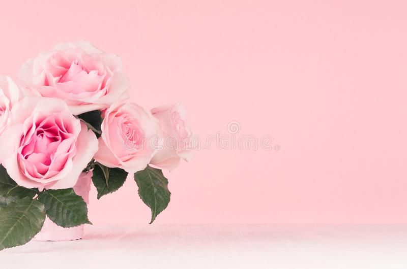 Mädchenhafter leichter Blumenhintergrund - vorzügliche rosa Rosen auf weißem hölzernem Brett, Kopienraum lizenzfreie stockfotografie