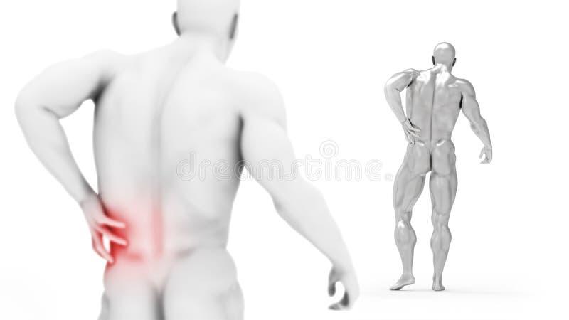 Männlicher Torso, Schmerz in der Rückseite lokalisiert auf weißem Hintergrund 3d übertragen Abbildung Konzept der medizinischen B vektor abbildung