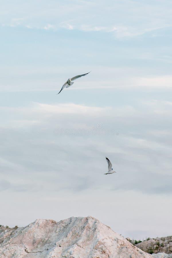 Möven fliegen in den Himmel über einem Gebirgssee stockbilder