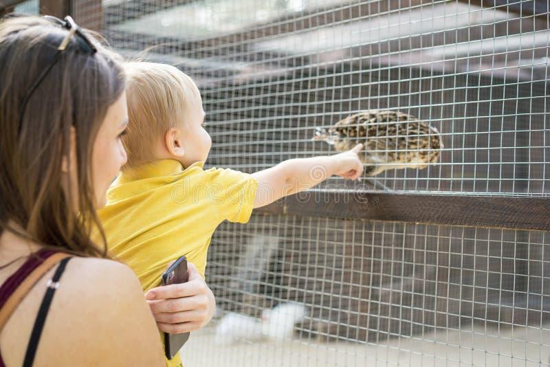 A mãe bonita da mulher mantém seu filho pequeno no jardim zoológico e olham o pássaro fotografia de stock