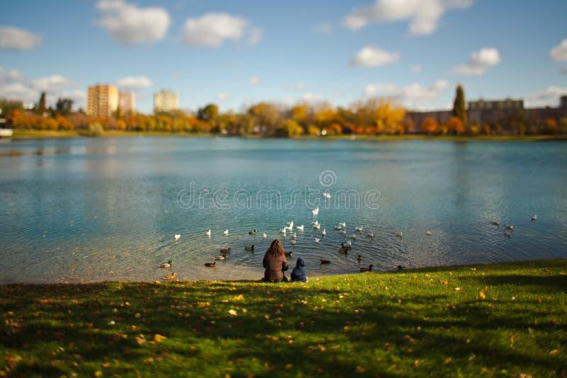 Mãe com a criança que senta-se pelo lago e por pássaros de alimentação - lente do deslocamento da inclinação imagem de stock