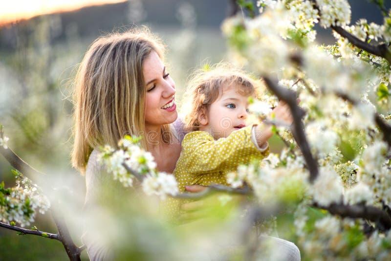 Mãe com filha pequena em pé ao ar livre em pomar na primavera, cheirando flores foto de stock royalty free