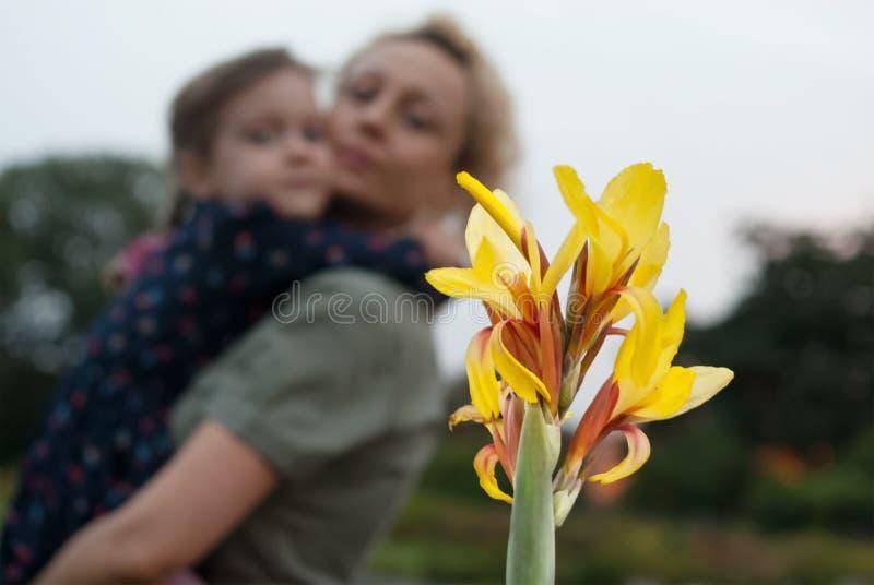 A mãe com uma menina em suas mãos olha a flor amarela do tipo de flor imagens de stock