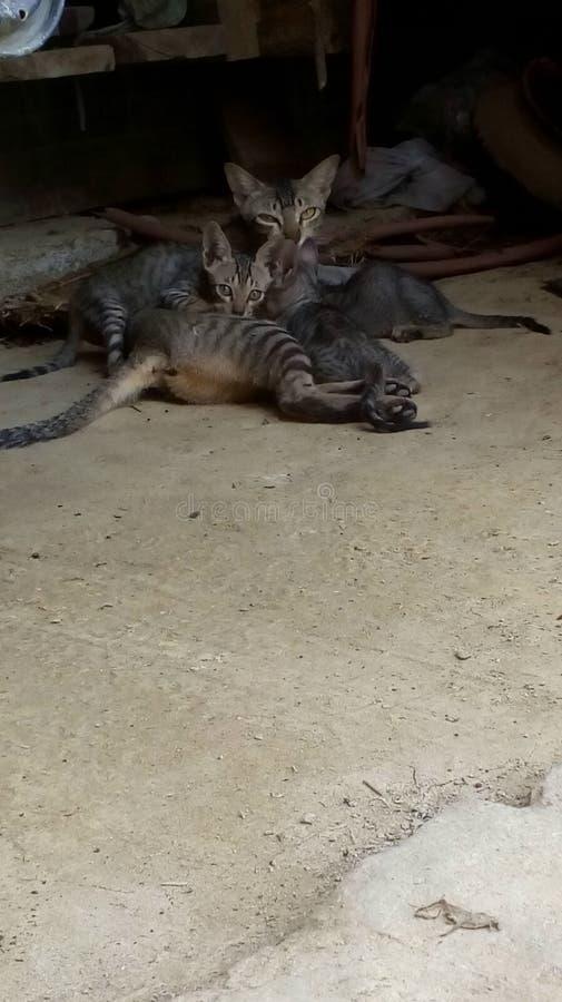 Mãe cuddlling do gato do bebê fotos de stock