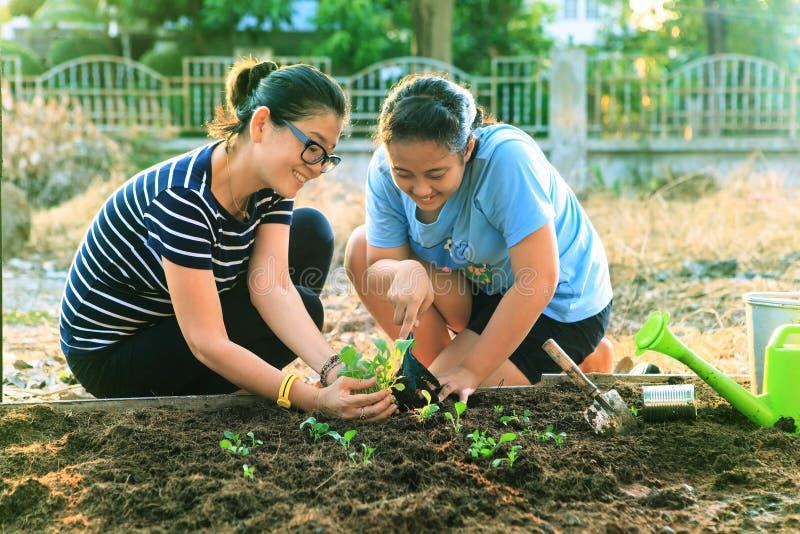 Mãe e filha nova que plantam o vegetal no campo home do jardim fotos de stock royalty free