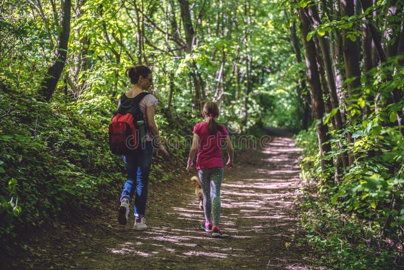 Mãe e filha que andam no trajeto nas madeiras foto de stock