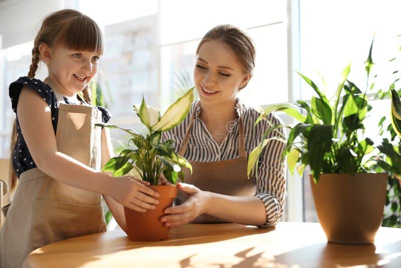 Mãe e filha que tomam de plantas da casa na tabela foto de stock royalty free