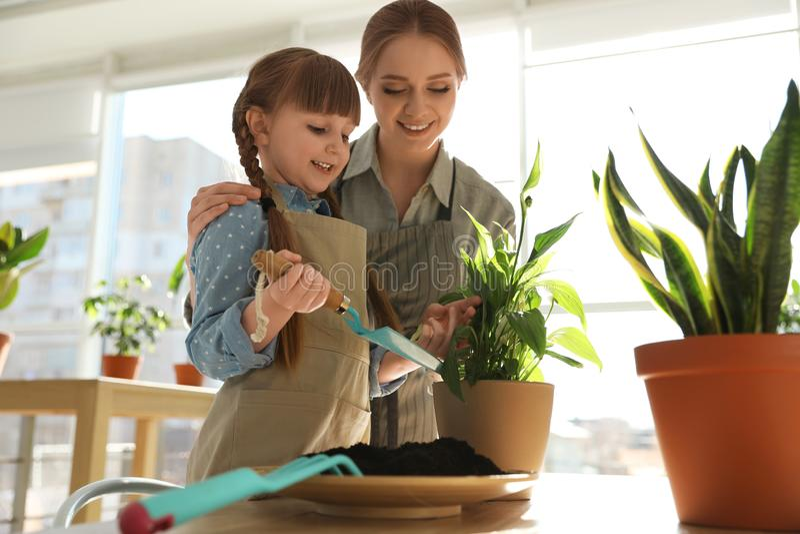 Mãe e filha que tomam de plantas da casa na tabela imagem de stock royalty free