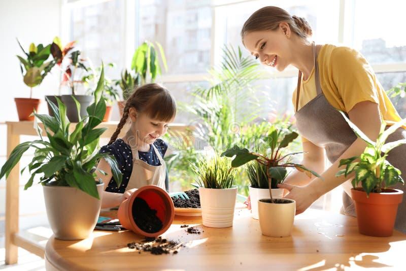 Mãe e filha que tomam de plantas da casa na tabela fotos de stock royalty free