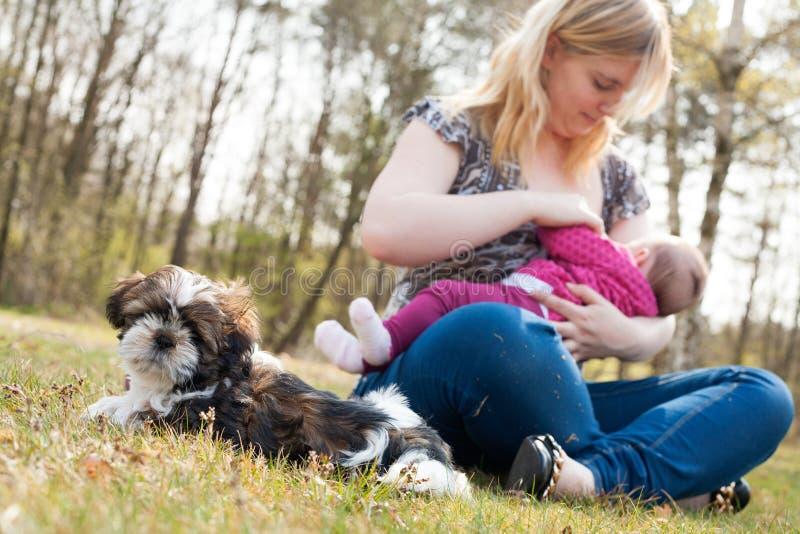 A mãe está alimentando o bebê quando o cachorrinho esperar fotografia de stock