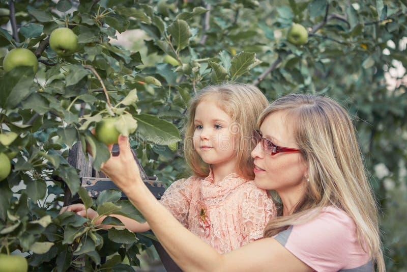 Mãe feliz e maçãs pequenas da colheita da filha no jardim fotografia de stock royalty free