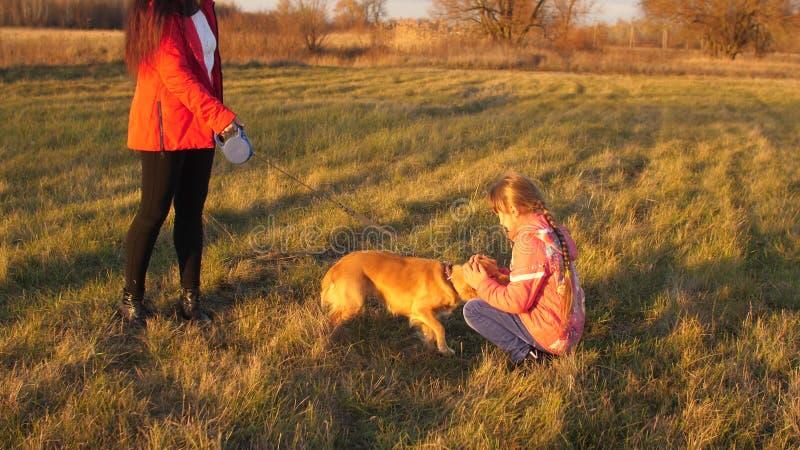 Mãe, filha e cão dando uma volta no campo, menina que afaga o cão da mão fotos de stock royalty free