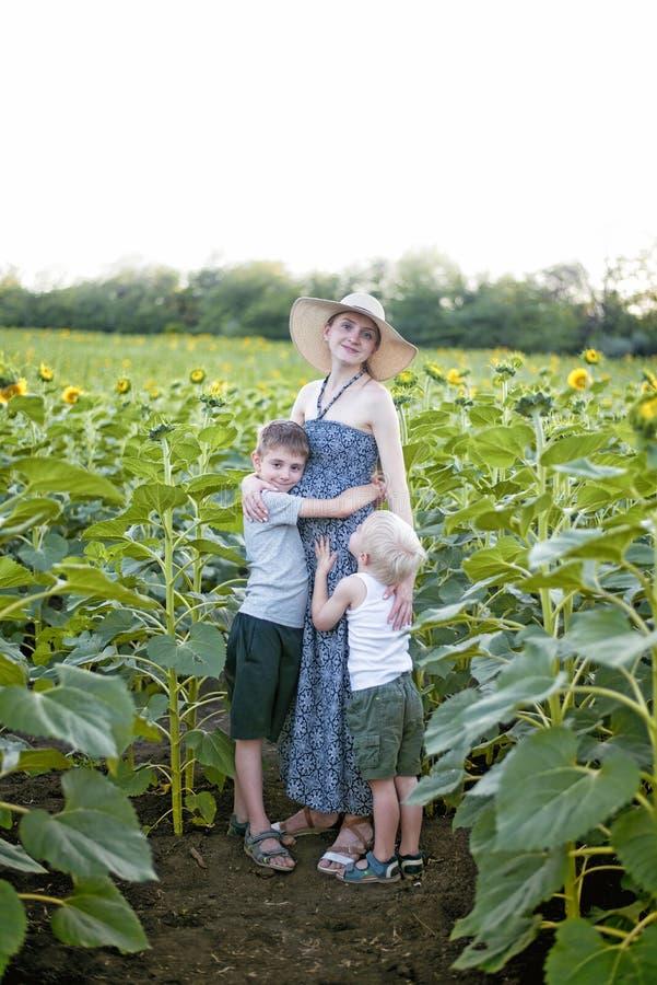 Mãe grávida feliz que abraça dois poucos filhos em um campo de girassóis de florescência Quadro vertical fotos de stock