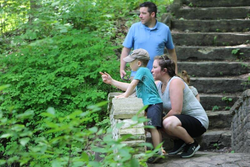 A mãe indica alguns animais selvagens ao dar uma volta através das madeiras foto de stock