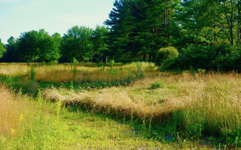 Mãe Natureza que recupera um campo de golfe fotografia de stock royalty free
