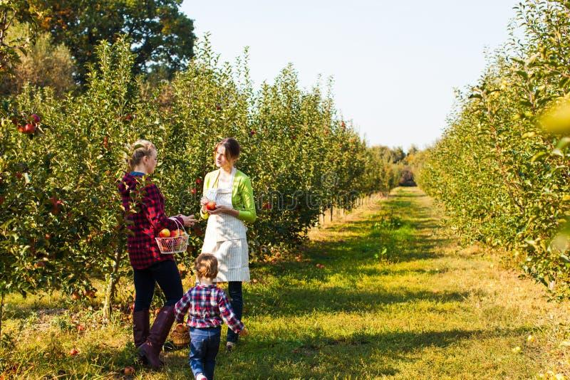 Mãe nova que escolhe maçãs para sua filha fotografia de stock
