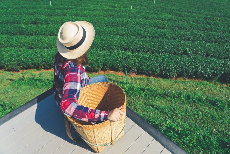 A mão asiática da mulher que pegara as folhas de chá da plantação de chá, os tiros novos é tiros macios A água é um alimento saud foto de stock royalty free