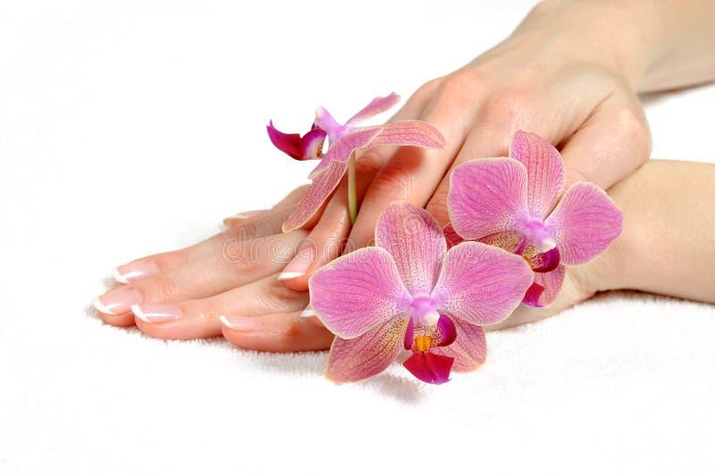 Mão bonita com manicure francês do prego perfeito imagens de stock royalty free