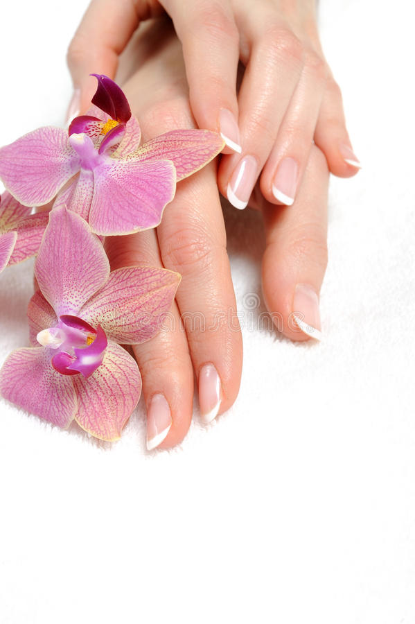 Mão bonita com manicure francês do prego perfeito imagem de stock