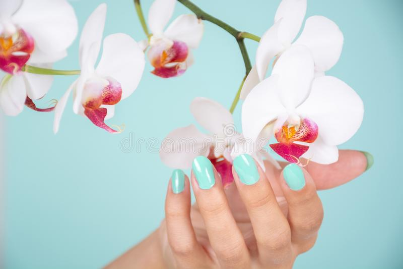 A mão bonita da mulher com uma cor de turquesa prega a flor polonesa e branca das orquídeas isolada no fundo azul macio no estúdi imagens de stock royalty free